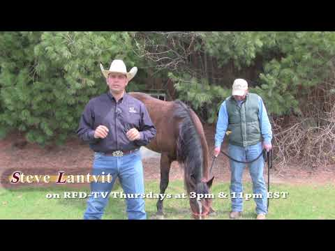 Checklist when buying a new horse - Steve Lantvit promo