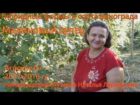 Виноград Малиновый супер - ультраранний срок созревания на участке Пузенко Натальи Лариасовны