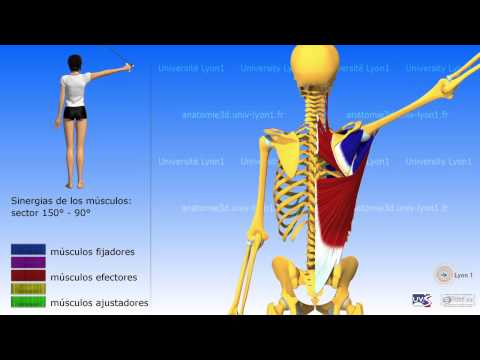 Dolor en los músculos del pecho y la cintura
