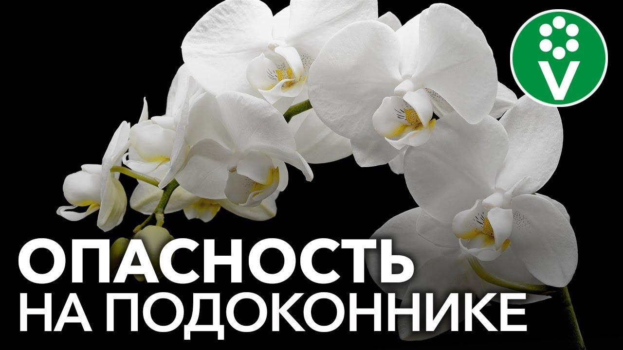 Популярные комнатные цветы опасны для здоровья