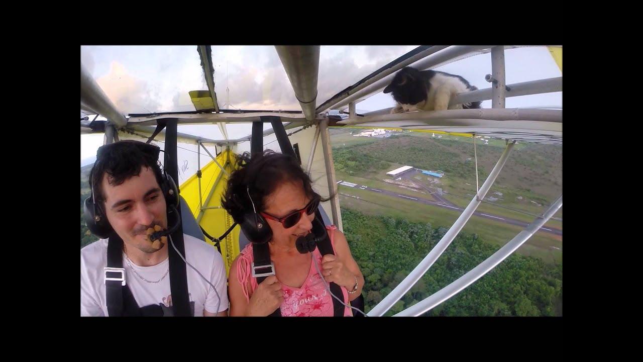 Remove cat before flight