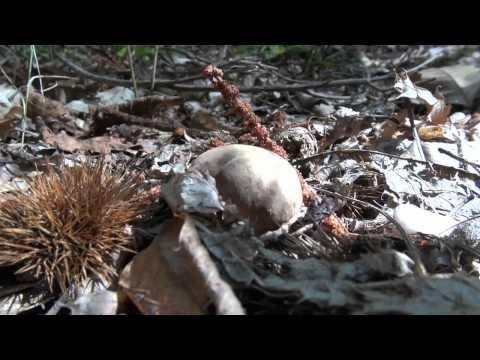 Come guarire ununghia di un fungo