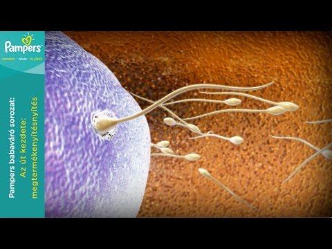 Parazita vese ciszta