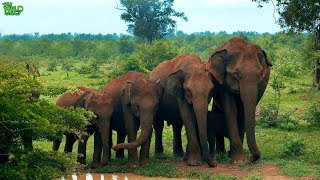 Intelligent Elephants line up nicely for a family photo