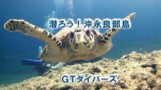GTダイバーズ沖永良部島