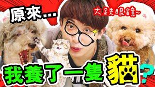【🤣大發現】原來…我養了一隻「貓🐱」?BROWNIE的興趣令我大跌眼鏡...🤣(中字)