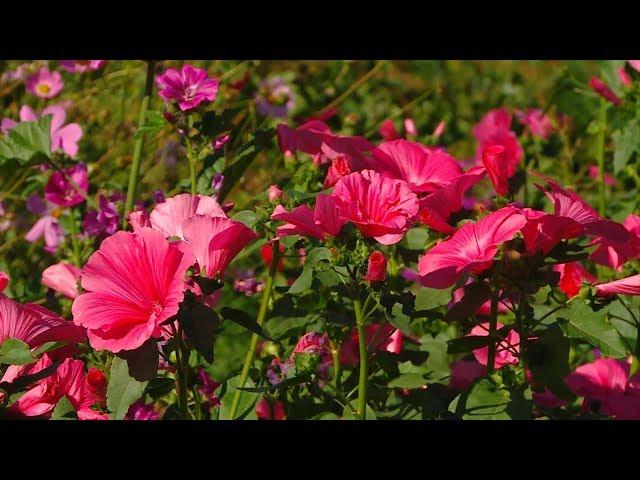 Определены лидеры телеконкурса «Садоводство с большой буквы»