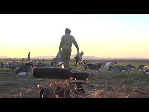 insane-oklahoma-goose-hunt-must-watch-120-geese-in-40-minutes