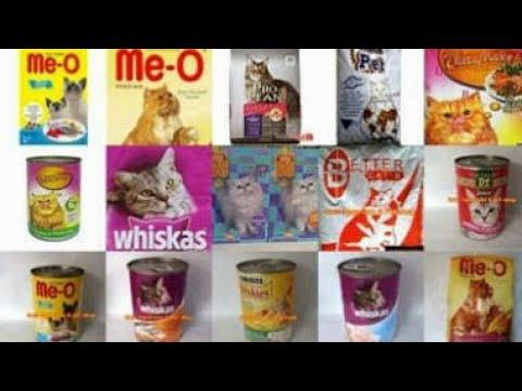 Video (NEW) Suka kucing wajib tahu Aneka makanan kucing bergizi