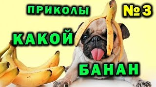 Твой банан 🍌 Мой банан 🐶 Приколы
