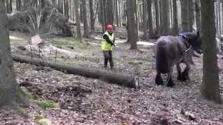 Débardage à cheval aux Vieilles Forges