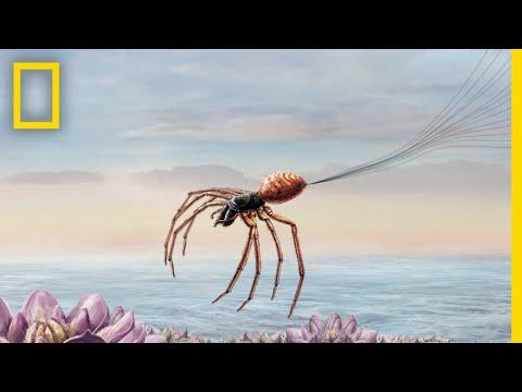 Jak pavouci využívají elektřinu k letu