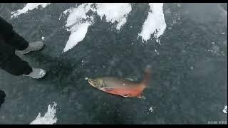 Рыбалка на новой земли