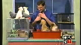 World's Worst Petkeeper on TV
