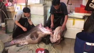 Hong Kong seafood of fisherman 西環魚王 休魚期間,都可見到深海野生220斤龍躉1/3