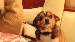Смотреть онлайн Хозяйка ругает виноватую собаку