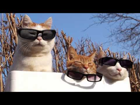 Cute Cats wearing sunglasses