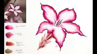 Impala Lily Flower Painting in Watercolor Small Palette