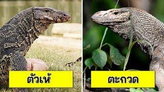 24 ชนิดสัตว์ ที่คนมักสับสน เรียกชื่อสลับกัน ผิดๆ ถูกๆ (งงนะเนี่ย !!) | OKyouLIKEs