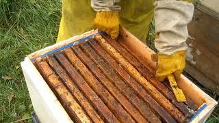 Пчеловодство.Формирую гнёзда пчёл в зиму. Играю с рамками в классики.