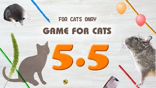 【CAT GAMES】MIX5.5 Rope,Mouse,etc.30min.