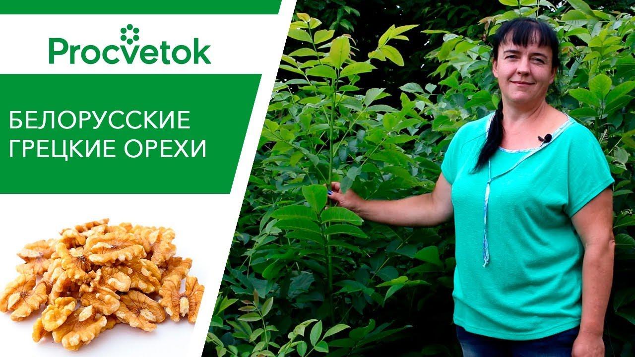 Все о выращивании саженцев грецкого ореха на своем участке
