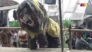 Singo Barong Rukun Manunggal Live Torongrejo Pujon