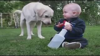 Смешные собаки, Смешное видео о собаках 2018#14