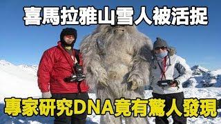 喜馬拉雅山雪人被活捉,專家研究DNA竟有驚人發現…