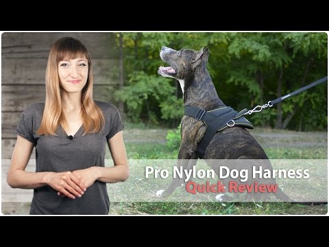 Nylon Dog Harness For Pulling, Walking And Training - Review