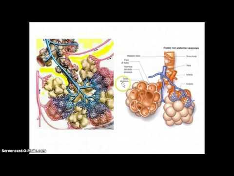 Ipertensione polmonare nei neonati sintomi e trattamento