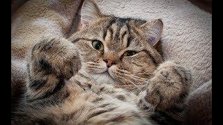ПРИКОЛЫ С КОШКАМИ  Смешные коты и кошки 2018 на Прикол ТВ