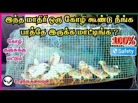 (100% பாதுகாப்பு)வித்தியாசமான கோழி குஞ்சு கூண்டு | Different kozhi kunju kundu |