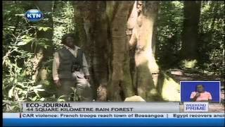 Eco-Journal: Conservation of the country's forests