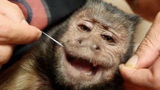 Monkey Makes Icee and Flosses Teeth! (BONUS CLIPS)