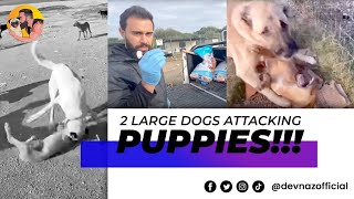 2 Large Dogs Attacking Puppies At The Shelter Removed!!! Dogfight Prevented!
