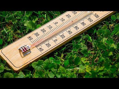 Температура для комнатных растений в течении года. Проветривание и сквозняки.