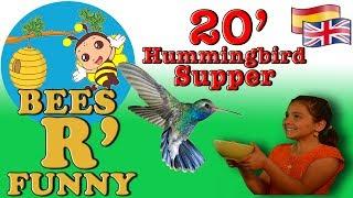 Inviting Hummingbirds to my Garden - Hummingbird Sounds!