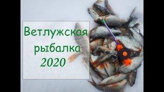 Отчеты о рыбалке на ветлуге 2020