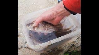 Рыбалка в ленинградской области на карася