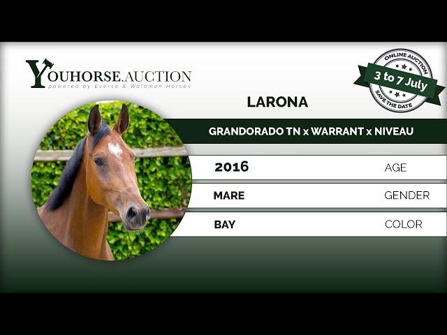 Larona under the saddle