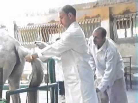 Pantao helmint impeksyon mula sa mga isda