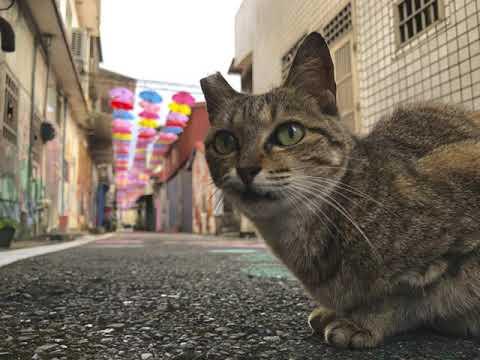 【甲仙貓巷】2021年度雨傘更新
