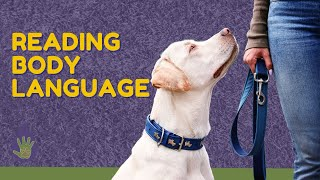 4 Ways To Read Your Dog