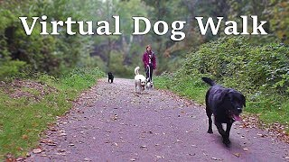 TV for Dogs : Calming Dog Walking TV - Virtual Woodland Walk