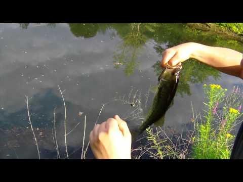 Bass fishing at hidden pond
