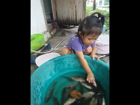หนอนปลาฆ่า