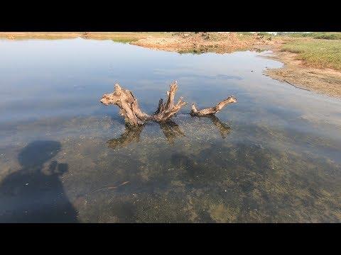 赶海发现陷在泥里的枯树根,玉平伸手一摸被夹得嗷嗷叫,连忙缩手