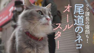 尾道のネコ オールスターズ!