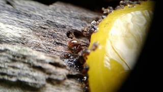 Second Ants 2018 With Macro Lens 😆 - Video Youtube